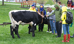 Students meet oxen at Farmer's Market