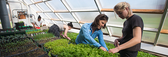 Teacher and students work in greenhouse